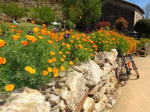 Cycling tours Southern France